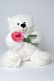 Toy bear holding red rose in arms. White toy bear holding red rose in arms Royalty Free Stock Photos