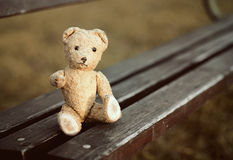 Toy bear looking Stock Image
