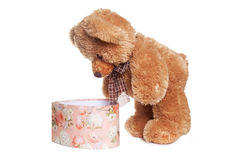 Toy bear looking inside pink present box stock images