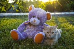 Toy Bear mit Katze Stockfotografie