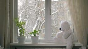 Toy Bear på fönsterbräda arkivfilmer