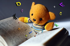 Toy bear reading. Book,very interesting Stock Photography