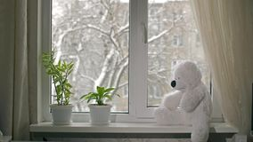 Toy Bear sul davanzale stock footage