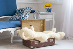 Toy bear is in a vintage suitcase Stock Image