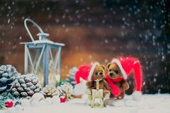 Toy bears in christmas interior Royalty Free Stock Images