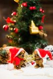 Toy bears in Christmas still life Royalty Free Stock Photo