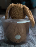 Toy Brown Rabbit in Plastic Tub Stock Images
