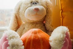 Plush Bunny with pumpkin stock photography