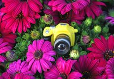Toy camera amid the purple flowers Stock Image