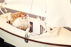 Toy cat sitting in a chair on the layout of a sailing yacht. Vacation dream concept royalty free stock photo