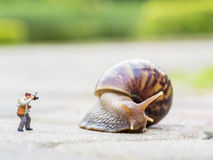 Toy charactor in using camera action. Pointing to big snail in nature outdoor Stock Image