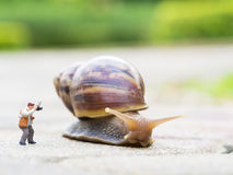 Toy charactor in using camera. Action pointing to big snail in nature outdoor Stock Image