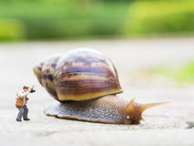 Toy charactor in using camera action. Pointing to big snail in nature outdoor Royalty Free Stock Images