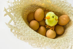 Toy chick with eggs Royalty Free Stock Photos