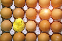 Toy chicken between eggs in packing Royalty Free Stock Photo
