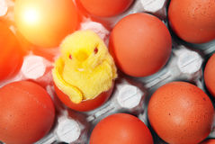 Toy chicken between eggs in packing Royalty Free Stock Photos