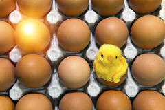 Toy chicken between eggs in packing Stock Photography