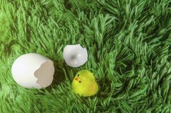 Toy chicken hatching from an egg. Little toy chicken in the eggshell on a green background like a grass Stock Photography