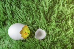 Toy chicken hatching from an egg. Little toy chicken in the eggshell on a green background like a grass Royalty Free Stock Images