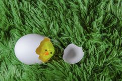 Toy chicken hatching from an egg. Little toy chicken in the eggshell on a green background like a grass Royalty Free Stock Photos