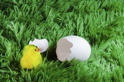 Toy chicken hatching from an egg. Little toy chicken in the eggshell on a green background like a grass Royalty Free Stock Photography