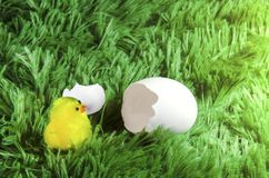 Toy chicken hatching from an egg. Little toy chicken in the eggshell on a green background like a grass Royalty Free Stock Image