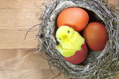 Toy chicken in a shell of bright Easter egg in a nest with eggs Stock Photography