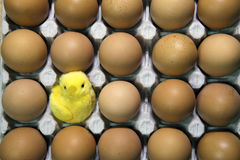 Toy chicken in shell of egg between eggs in packing Royalty Free Stock Images