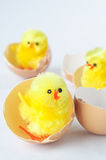 Toy Chicks Hatching Stock Image