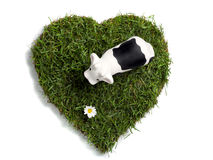 Toy cow and daisy flower on heart-shaped lawn Stock Photo