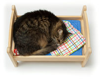 Toy cradle and a cat Royalty Free Stock Images