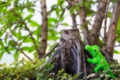 Toy crocodile on stump. Toy crocodile aside tree stump Stock Photography