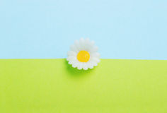 Toy daisy between green and blue Stock Images
