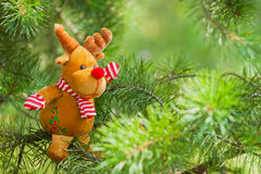 Toy deer on natural fir branch for decoration Royalty Free Stock Photo