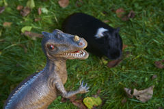 Toy dinosaur monster raptor fighting with guinea pig on the green grass Stock Image