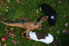 Toy dinosaur monster raptor fighting with guinea pig on the green grass Royalty Free Stock Image