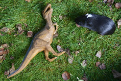Toy dinosaur monster raptor fighting with guinea pig on the green grass Royalty Free Stock Photography