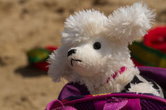 Toy dog ​​in a bright bag stock photography