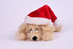 Toy dog ​​in a Christmas hat on an abstract background. Stock Photos