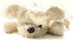 Toy a dog Royalty Free Stock Photo
