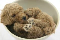 Toy dog. Cute little sleepy toy dog stock photo