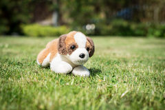 Toy Dog Fotografia Stock Libera da Diritti
