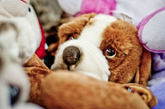 Toy dog with big eyes. Royalty Free Stock Images