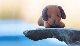 Toy Dog en fondo natural Fotos de archivo