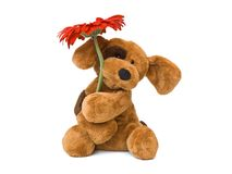 Toy dog and flower Stock Images