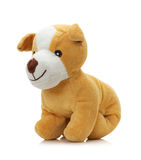 Toy dog isolated on a white background Royalty Free Stock Photo