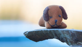 Toy Dog op natuurlijke achtergrond Stock Foto's