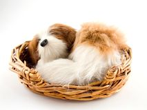 Toy dog sleeping in basket Stock Photo