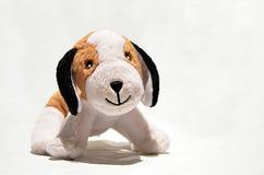 Toy dog. Stuffed toy dog on white background royalty free stock image