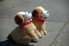 Toy dogs Stock Photos